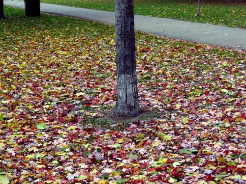 Autumnchange