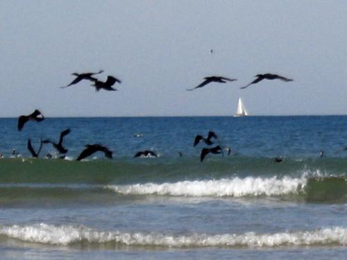 Cormorants01