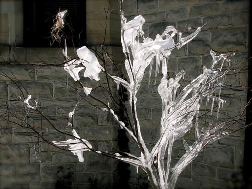 Narniatree